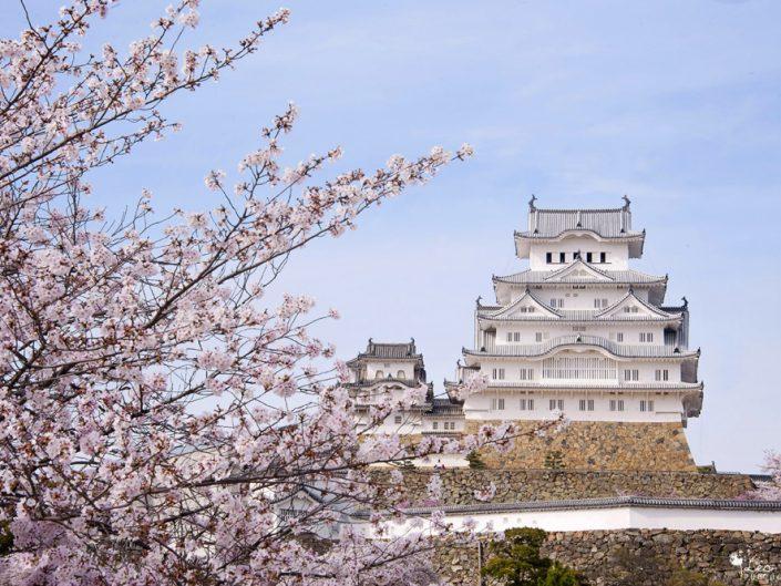 Japon : un printemps au pays des Sakura