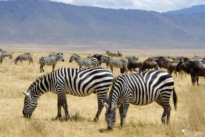 Tanzanie : combo Safari et Zanzibar